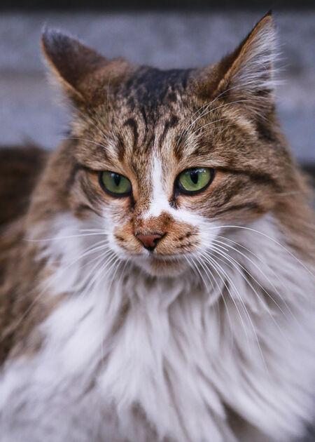 绿眼睛的猫